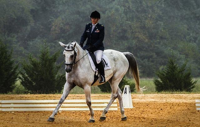 Dressur Reiten / Dressur Pferde