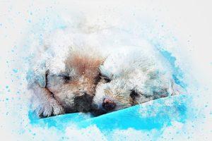 Hundeschlafsack gegen Kälte