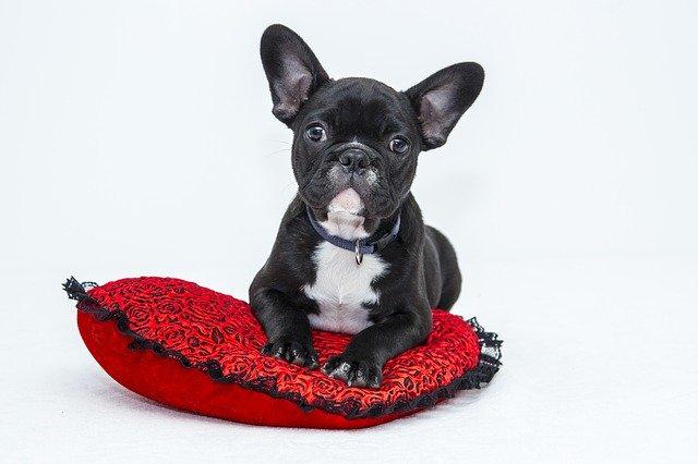 Hundehöhle – der optimale Rückzugsort