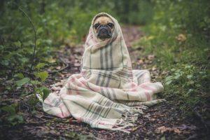 Die Hundehöhle wirkt wie eine Decke