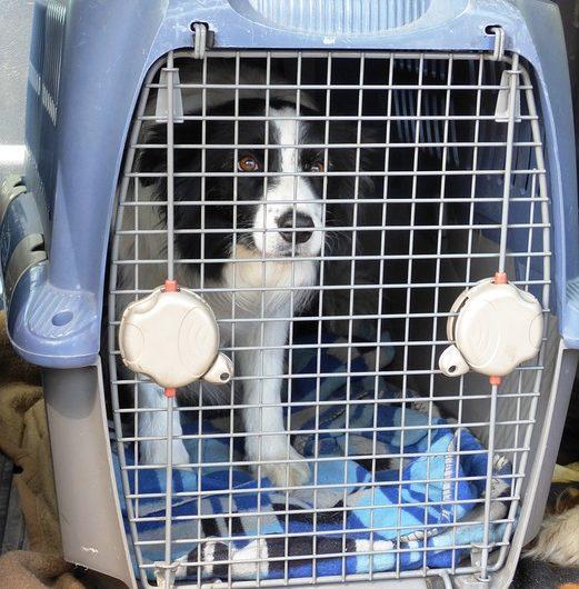 Fliegen mit Hund – wichtige Informationen für die Flugreise mit Hund