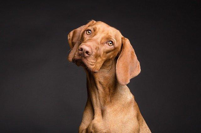 Hundekrankenversicherung: Wie sinnvoll ist eine Krankenversicherung für Hunde?