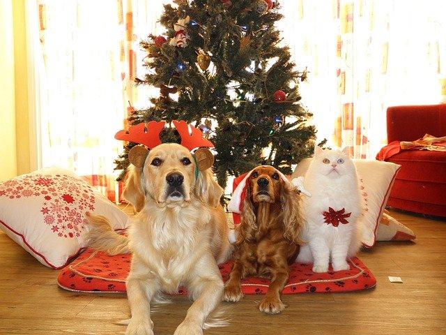 Originielle Weihnachtesgeschenke für Tierliebhaber