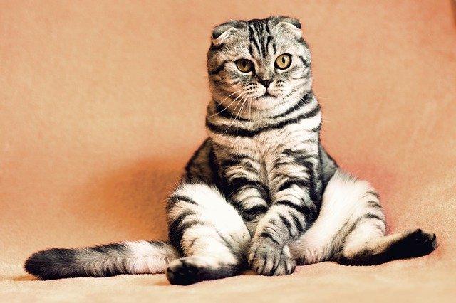 Katzenurin entfernen – So geht's richtig